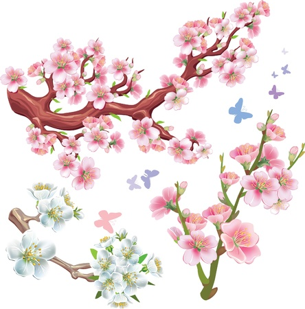 cherry branch: Set of flowering branches