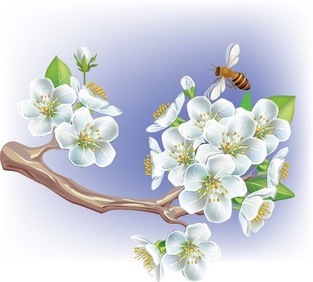 bee on white flower: Flowering branch Illustration