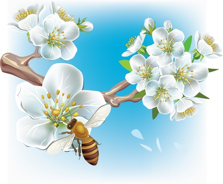 Flowering branch and a bee Stock Vector - 9626469