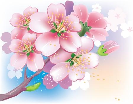Flowers of sakura Vector