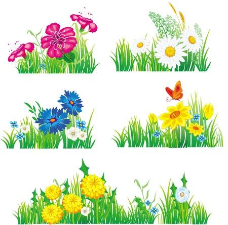 kamille: Blumen und Gras Illustration