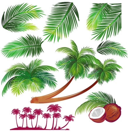 palm tree fruit: Tropical palms Illustration