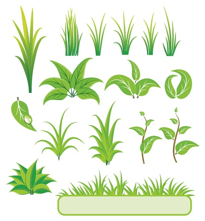 sprout growth: Green elements for design