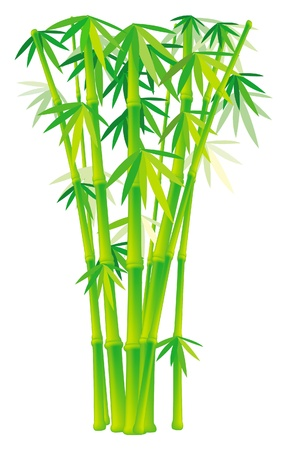 Group of bamboo stalks Stock Vector - 9626515