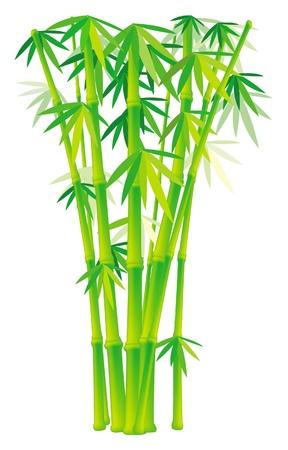 clima tropical: Grupo de bambú acecha Vectores