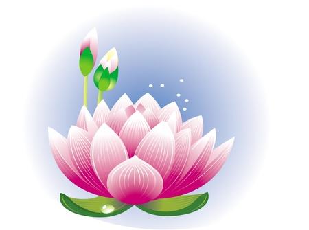 Lotus flower Stock Vector - 9626496