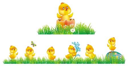 poult: Pollo en hierba Vectores