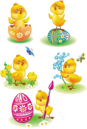 easter chick: Easter chicks
