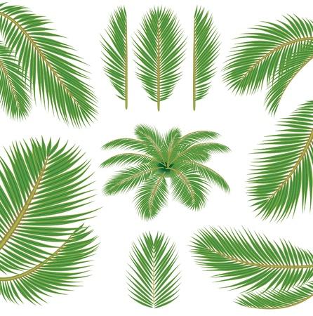 vector brush for illustrator