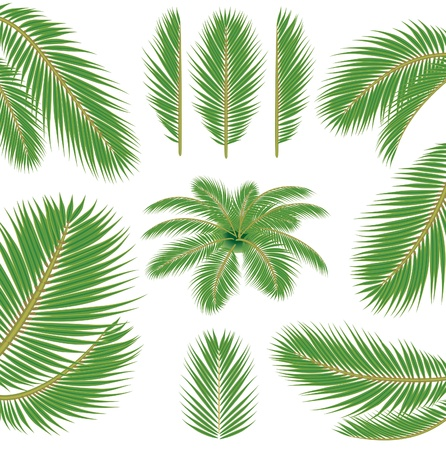 palm fruits: vector brush for illustrator