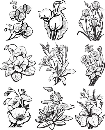 iris flower: Set of sketches of flowers