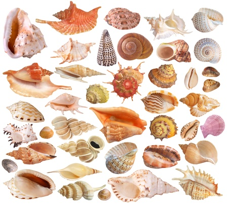 Collection Seashell Banque d'images