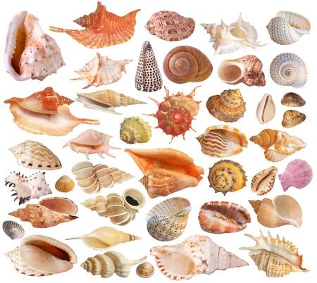 Seashell collection photo