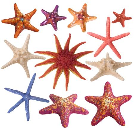 star of life: Conjunto de estrella de mar pintado Foto de archivo