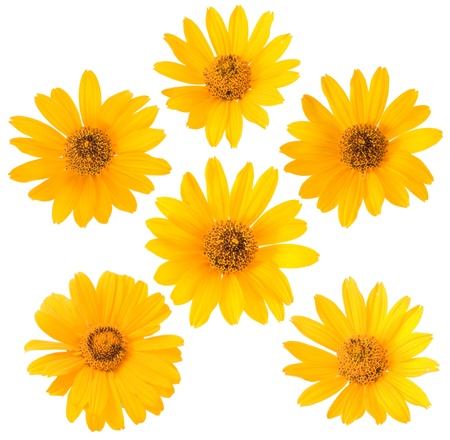 bloomy: yellow flower on white background