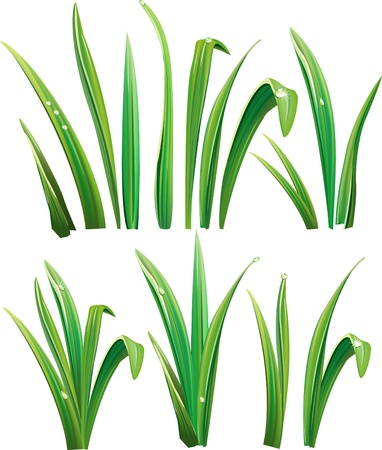 herbage: Green grass on white Illustration