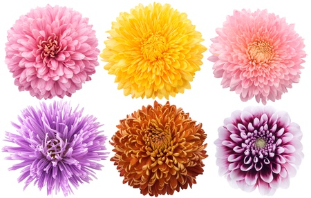Set of dahlia flowers in different color Stock Photo - 9745179