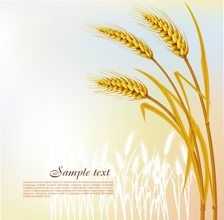 Background with wheat Stock Vector - 9716621