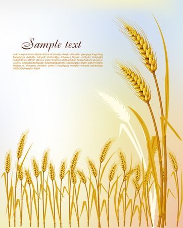 Background with wheat Stock Vector - 9716625