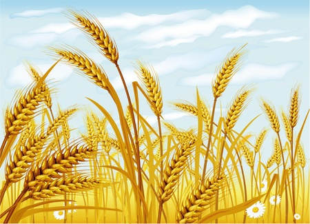 Wheat in the field Stock Vector - 9716634