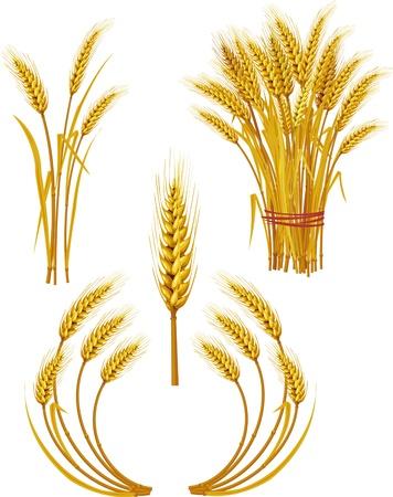 weizen ernte: Weizen