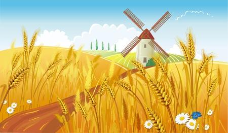 cosecha de trigo: Paisaje rural con molino de viento
