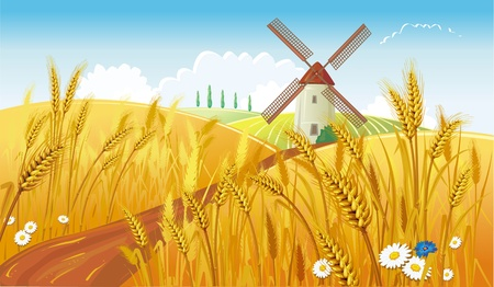 wheat illustration: Rural landscape with windmill Illustration