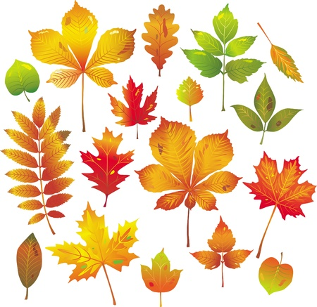 decision tree: Colorful autumn leaves collection