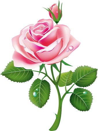 beautiful pink rose Stock Vector - 9716647