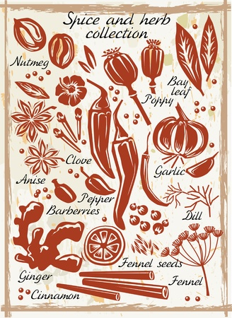 cinnamon: Spice and herb collection Illustration