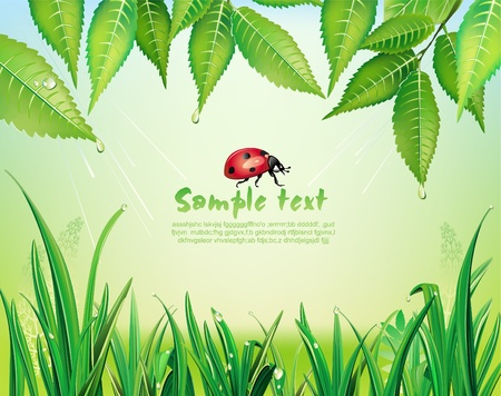 Background with green grass and leaves Vector