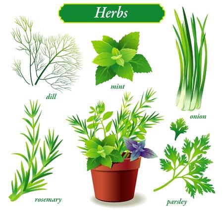 flavoring: Herbs