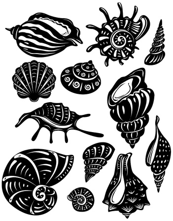 cockleshell: Set of decorative shell Illustration