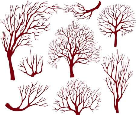 tree silhouette: Silhouettes of trees