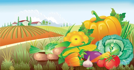 pumpkin tomato: landscape with a group of vegetables