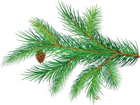 Pine branch Stock Vector - 10993636
