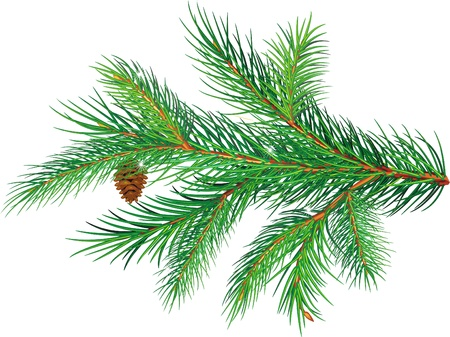 pine decoration: Pine branch