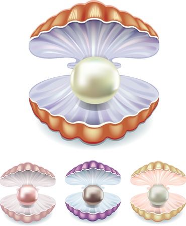 Set of pearls in the shells of different colors Vector