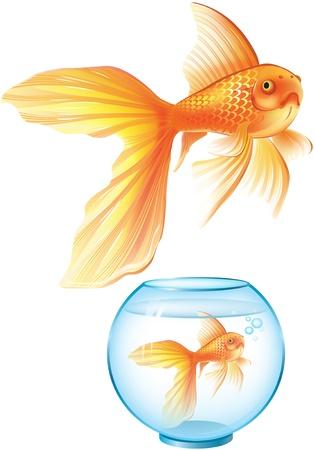 gold fish bowl: Goldfish