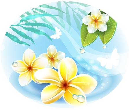 Frangipani plumeria flowers on the water Stock Vector - 14439863