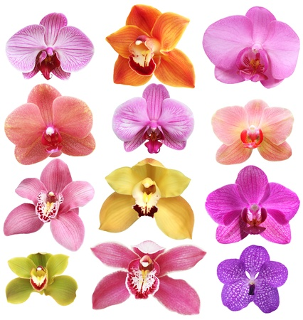 Set of pink orchid isolated on white
