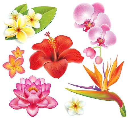 beautiful red hibiscus flower: Conjunto de flores tropicales