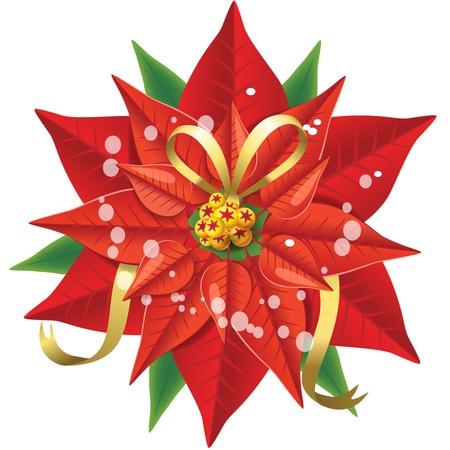 pulcherrima: Poinsettia Illustration