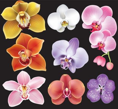 蘭の花のコレクション