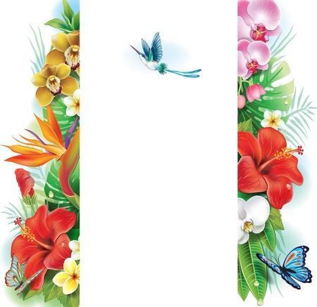 hibisco: Banner de flores tropicales y hojas