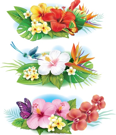 flower arrangement: Arrangement from tropical flowers Illustration
