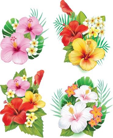히비스커스 꽃의 배열 일러스트