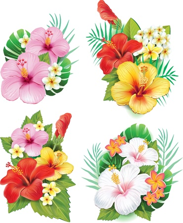 rainforest: Arrangement from hibiscus flowers Illustration