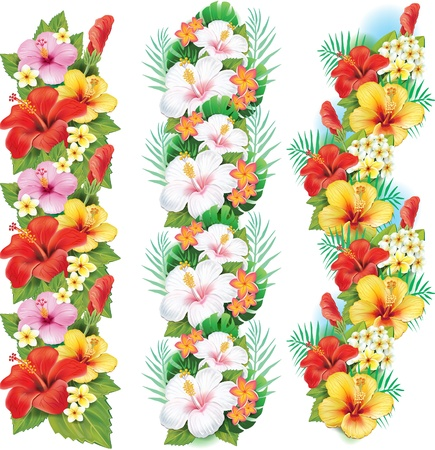 Garland of hibiscus flowers Vector