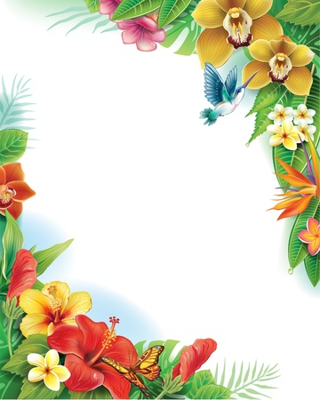 frangipani flower: Background from tropical flowers and leaves Illustration